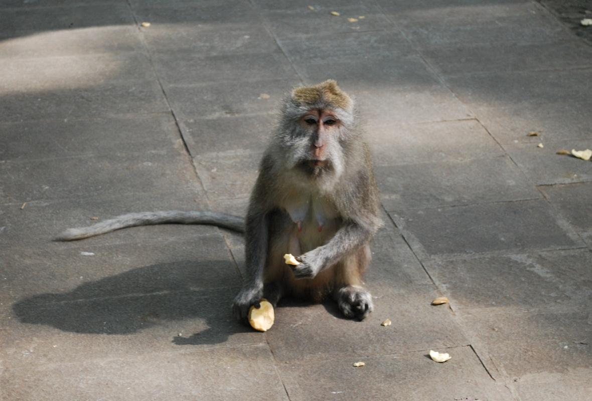 Bai-monkey-forrest2