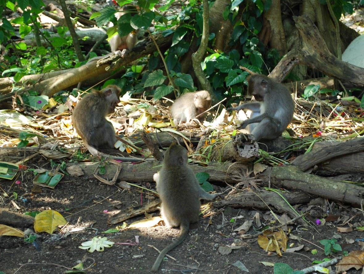 Bali-monkey-forrest3