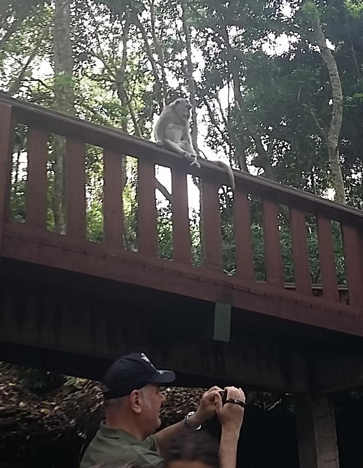 Bali3.-animalsjpg