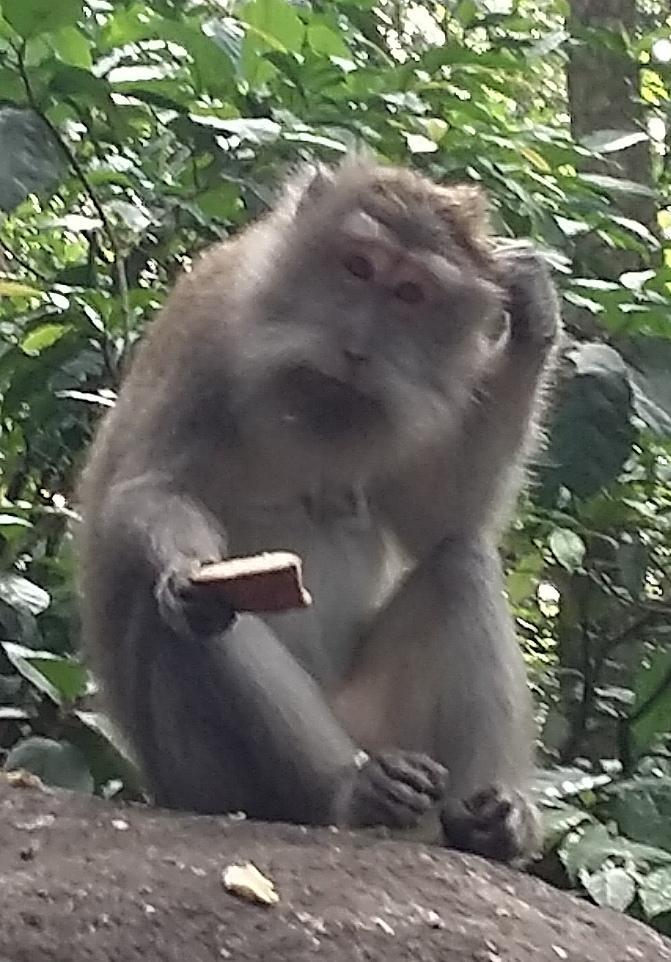 Bali4-animals