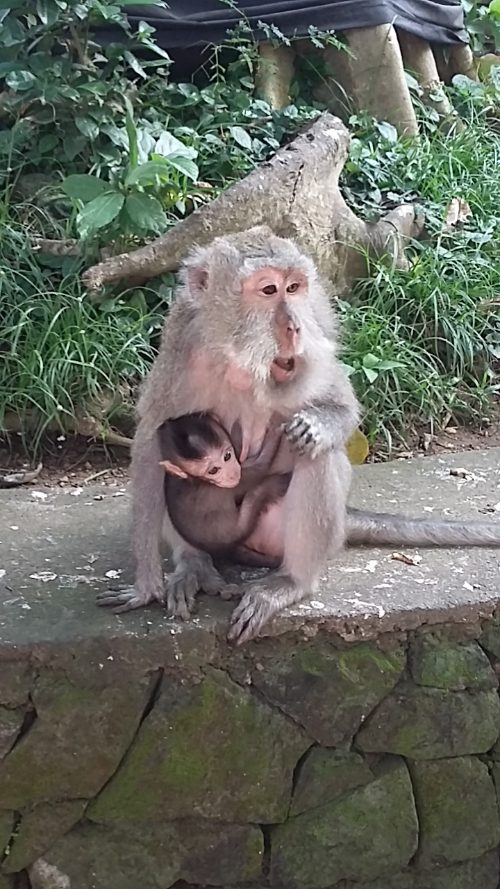 Bali5-animals