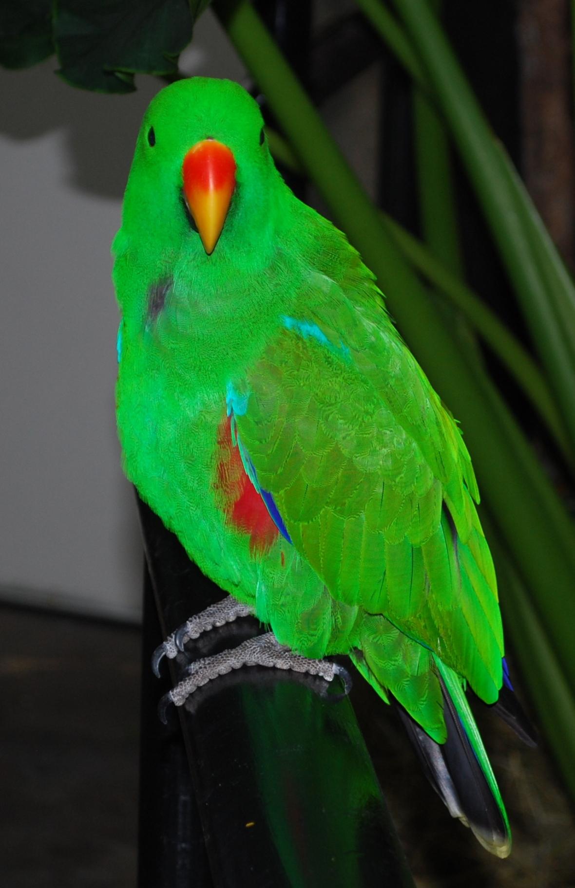 Cairns-zoo1