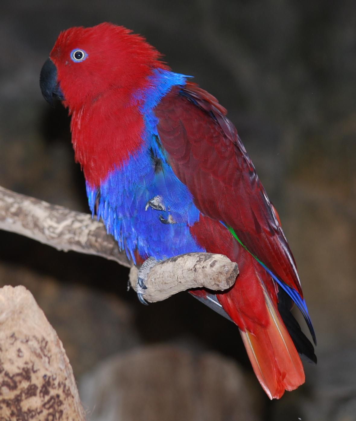 Cairns-zoo2