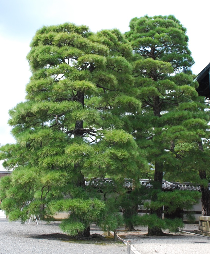 kyoto-imperial-palace7