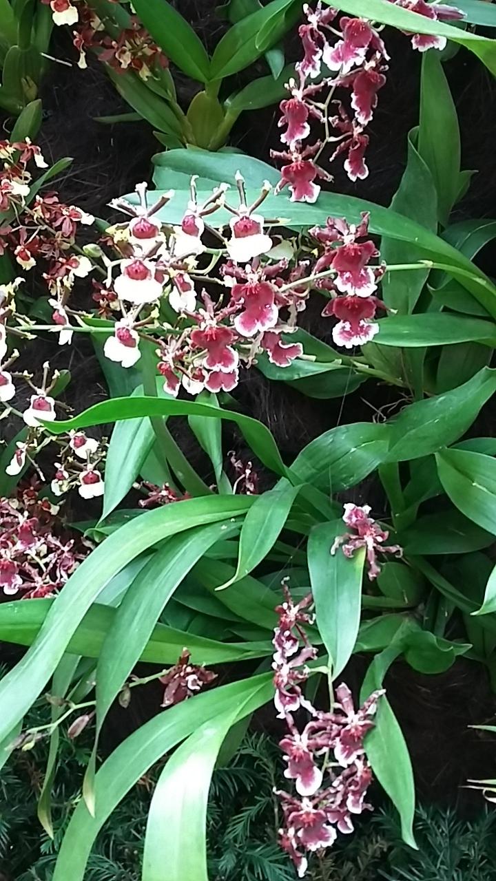 Singapore10-flower