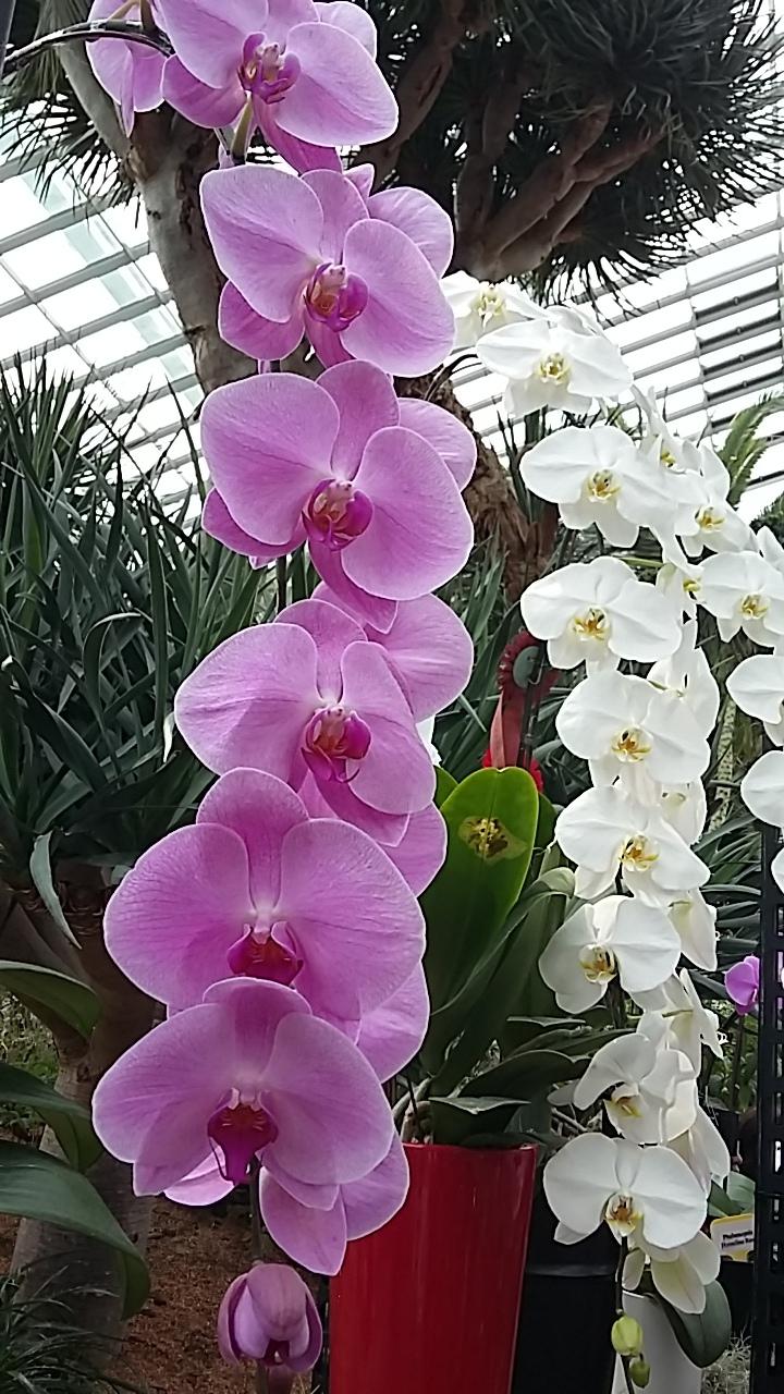 Singapore6-flower