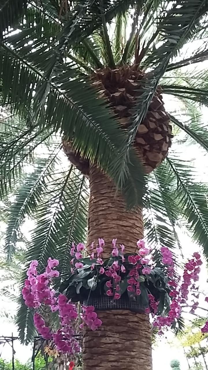 Singapore8-flower