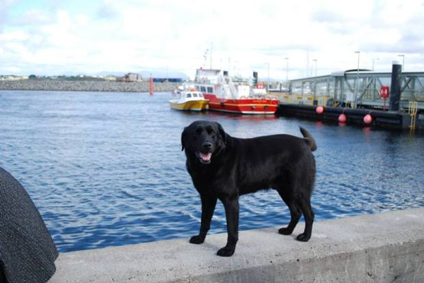 ferries-dog-rossaveal