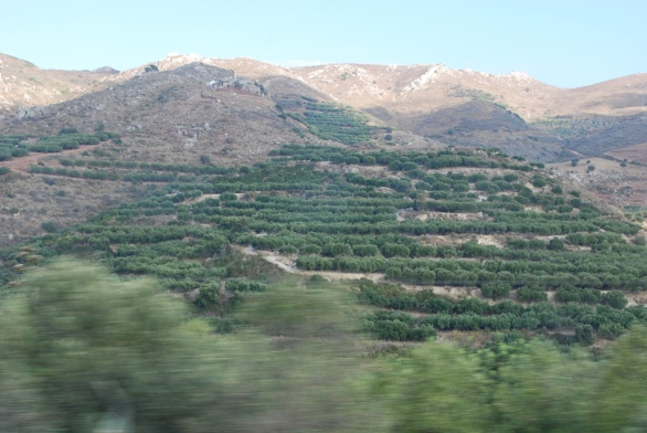 falasarna-olives