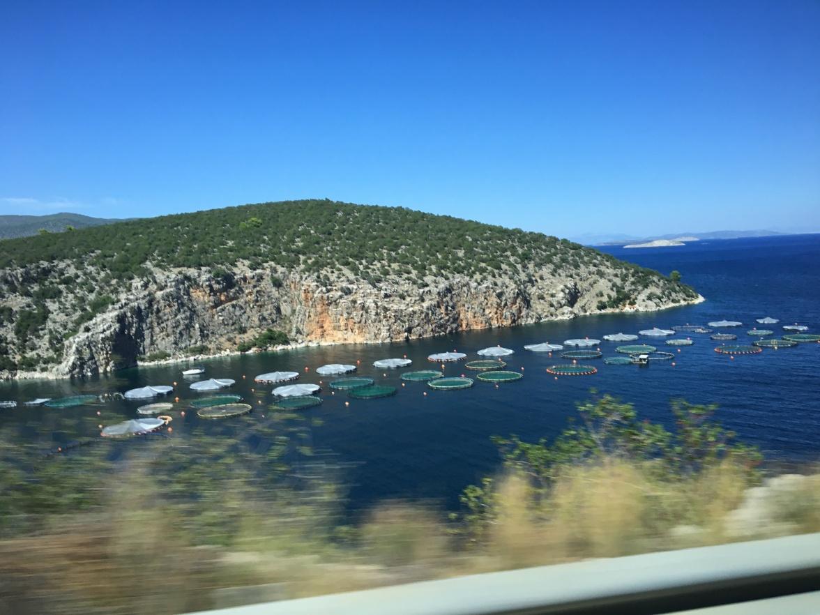 sailing-fish-farms