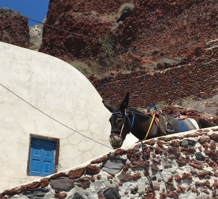 santorini-amoudi-donkey