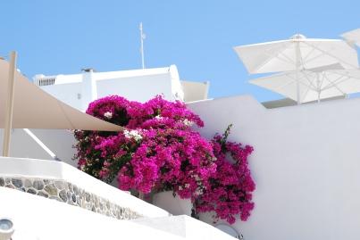 santorini-pink-flower