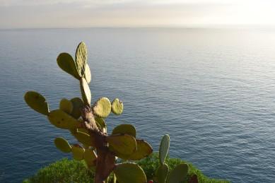 corniglia-cactus